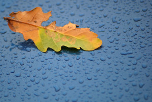 Brown and green leaf on a blue surface surrounded by raindrops