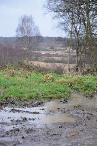 A view across muddy puddles between trees and out across common land