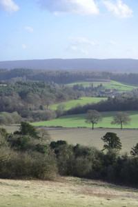 Portrait view of a landscape showing rolling hills and trees