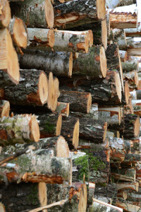 Fresh cut logs piled up on one another showing their cut ends and lichen and bark